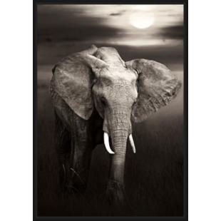 FLY-toile caisse americaine 67x94cm elephant