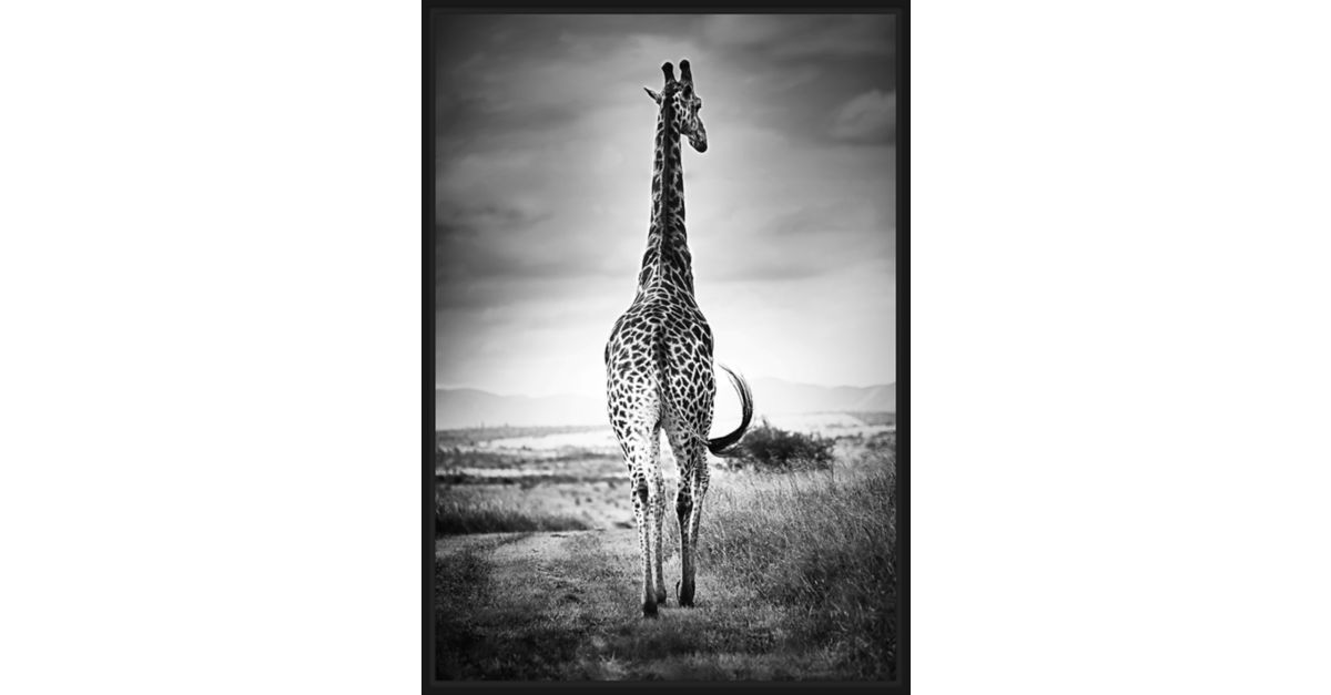 Toile caisse americaine 94x67cm girafe tableau d co - Fly decoration murale ...