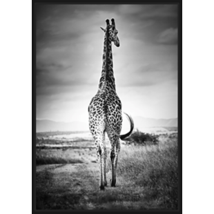 FLY-toile caisse americaine 94x67cm girafe