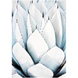 FLY-image laminee 65x92cm aloevera