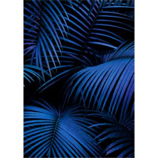 FLY-image laminee glossy 65x92,5cm